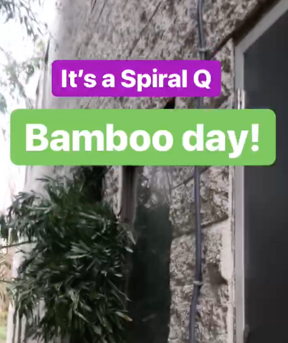It's a Spiral Q Bamboo Day!